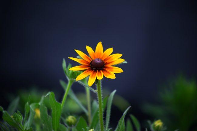試験問題は野原に咲く花ではない。かならず作った人間がいる。